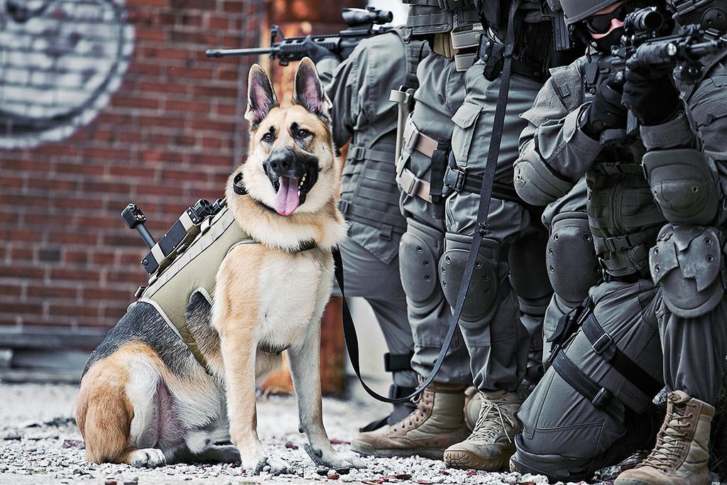 تدريب عمليات الخاصة بكلاب شرطة